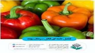 عادت های غذایی مناسب جهت حفظ سلامتی و پیشگیری از بروز مجدد بیماری